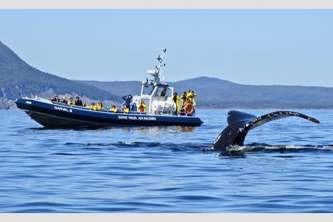 Croisière baleines